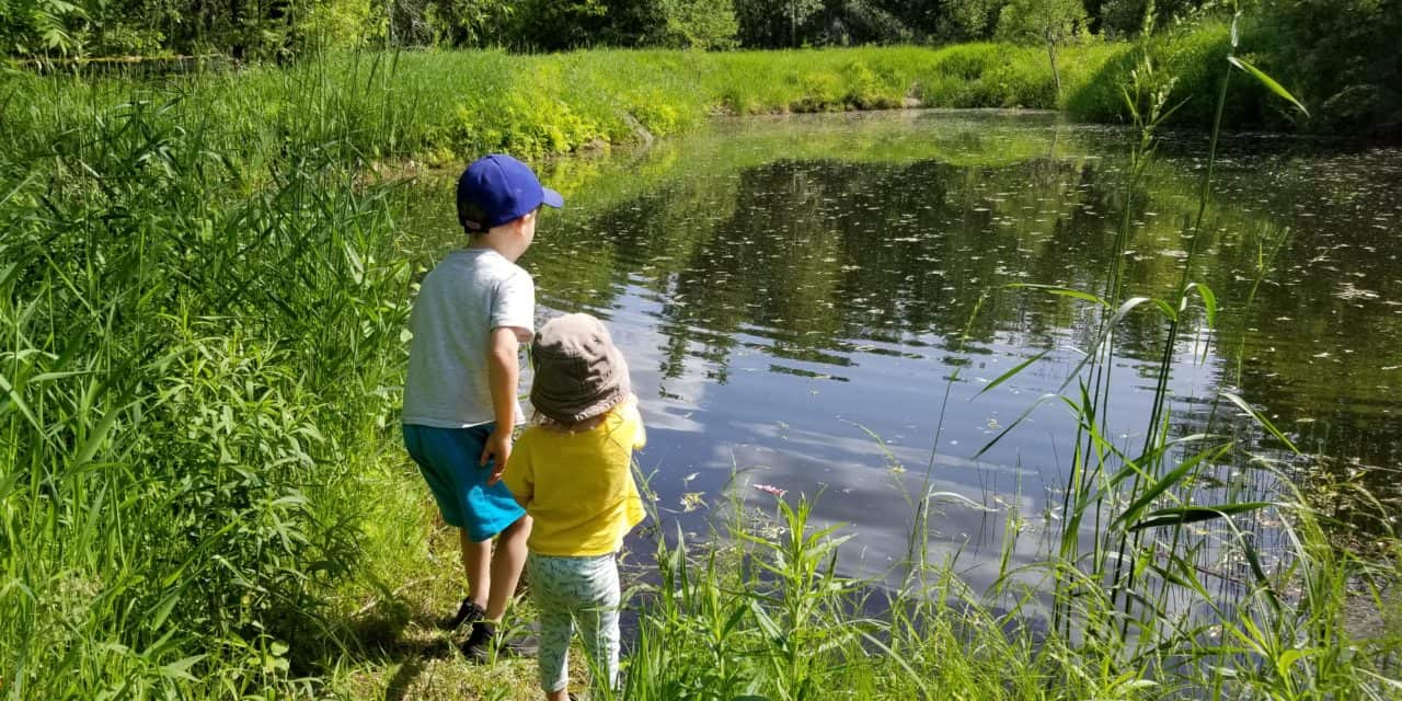 A Walk to the Pond